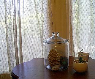 Plants 084