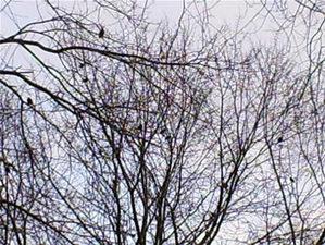 Bird4_1