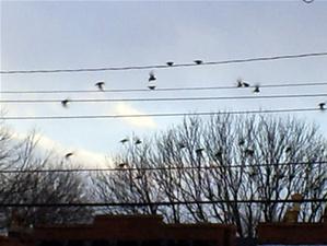 Birds1_2